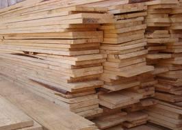 Tábua de Pinus (2)